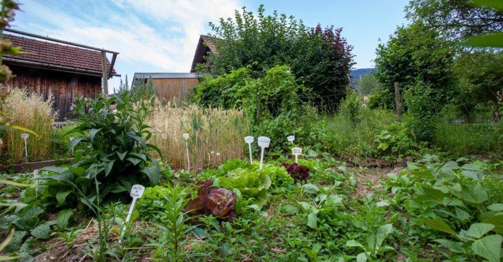 banneret-wisard-jardin-potager-2