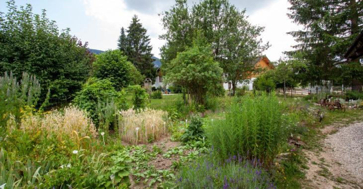 banneret-wisard-jardin-potager